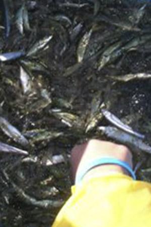 秘境クッチャロ湖 漁業体験写真