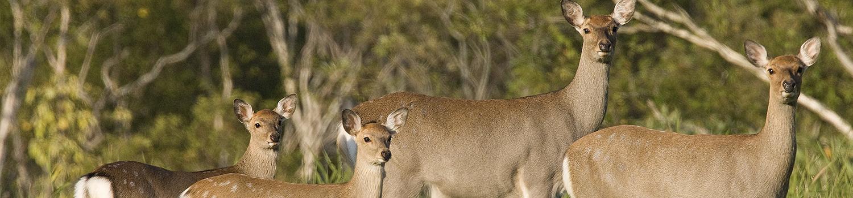鹿ハンティング見学