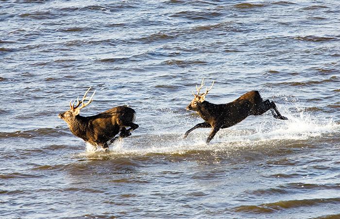 秘境鹿ハンティング見学写真