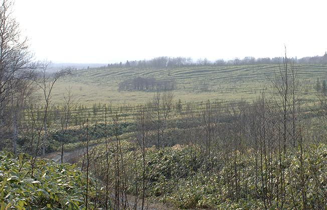 湖畔林のササ地化エリア現地の写真