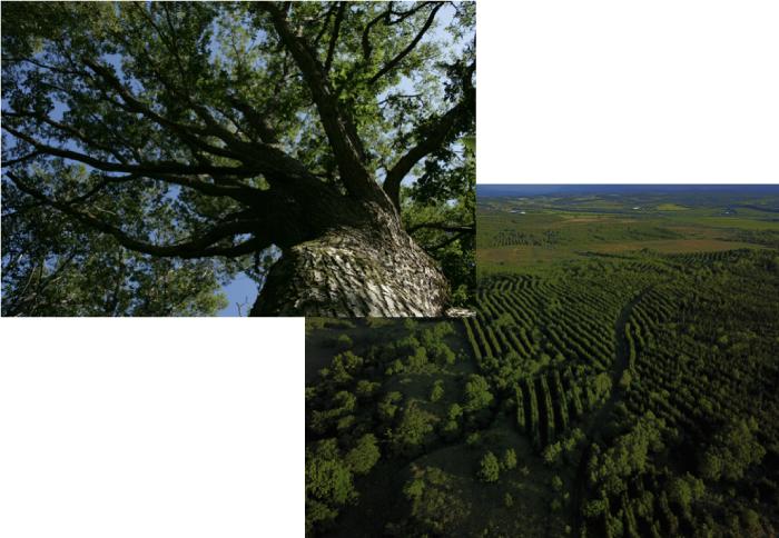 森を護ることでCO2を減らす。